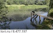 Купить «Озеро в горах Кавказа. Собака ходит по мостику», эксклюзивный видеоролик № 8477197, снято 3 августа 2015 г. (c) Алексей Бок / Фотобанк Лори