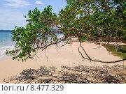 На пляже Индийского океана, Таиланд. Стоковое фото, фотограф Виталий Булыга / Фотобанк Лори