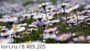 Купить «plant flower season spring flowers», фото № 8489205, снято 22 июля 2018 г. (c) PantherMedia / Фотобанк Лори