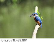 Купить «blue orange turquoise kingfishers kingfisher», фото № 8489801, снято 5 июля 2020 г. (c) PantherMedia / Фотобанк Лори