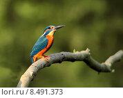Купить «nature blue orange turquoise disposition», фото № 8491373, снято 24 мая 2019 г. (c) PantherMedia / Фотобанк Лори