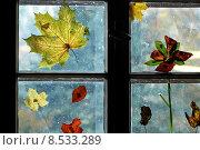 Купить «decoration season leaf autumn leaves», фото № 8533289, снято 20 июня 2019 г. (c) PantherMedia / Фотобанк Лори
