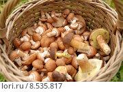 Купить «Mushrooms in basket», фото № 8535817, снято 30 мая 2020 г. (c) PantherMedia / Фотобанк Лори