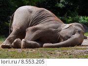 Купить «elephant skew benjamin oblique dickh», фото № 8553205, снято 19 июля 2018 г. (c) PantherMedia / Фотобанк Лори