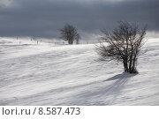 Купить «caucasian tree european winter cold», фото № 8587473, снято 21 октября 2018 г. (c) PantherMedia / Фотобанк Лори