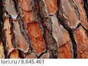 Купить «pine cortex», фото № 8645461, снято 18 июня 2019 г. (c) PantherMedia / Фотобанк Лори