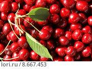 Купить «red page harvest sheet perfect», фото № 8667453, снято 16 июня 2019 г. (c) PantherMedia / Фотобанк Лори