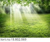 Купить «nature light tree bright grass», фото № 8802069, снято 19 марта 2019 г. (c) PantherMedia / Фотобанк Лори