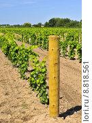 Купить «Vineyard», фото № 8818561, снято 24 января 2019 г. (c) PantherMedia / Фотобанк Лори