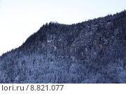 Купить «tree mountain forest trees bavaria», фото № 8821077, снято 23 марта 2019 г. (c) PantherMedia / Фотобанк Лори