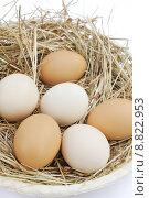 Купить «Fresh farm eggs», фото № 8822953, снято 16 июня 2019 г. (c) PantherMedia / Фотобанк Лори