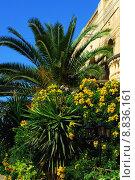Купить «palm tree malta arecaceae gozo», фото № 8836161, снято 20 января 2019 г. (c) PantherMedia / Фотобанк Лори
