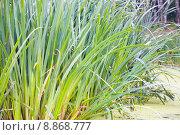 Купить «Трава на болоте», фото № 8868777, снято 2 августа 2015 г. (c) Дмитрий Булин / Фотобанк Лори