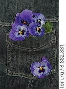 Купить «plant flower flowers jeans violet», фото № 8882881, снято 17 сентября 2019 г. (c) PantherMedia / Фотобанк Лори