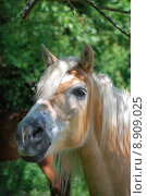 Купить «portrait horse mane pony gregarious», фото № 8909025, снято 26 марта 2019 г. (c) PantherMedia / Фотобанк Лори