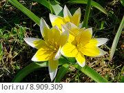 Купить «yellow plant flower bright wild», фото № 8909309, снято 22 октября 2019 г. (c) PantherMedia / Фотобанк Лори