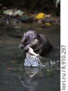 predator engulf devour otter fodder. Стоковое фото, фотограф Martina Berg / PantherMedia / Фотобанк Лори