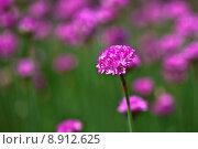 Купить «nature plant flower spring garden», фото № 8912625, снято 24 января 2019 г. (c) PantherMedia / Фотобанк Лори