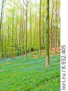 Купить «Bluebells in forest», фото № 8932405, снято 25 июня 2019 г. (c) PantherMedia / Фотобанк Лори