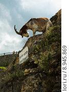 Купить «sign clouds signal goat capricorn», фото № 8945869, снято 19 января 2020 г. (c) PantherMedia / Фотобанк Лори