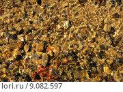 Купить «nature water stones disposition silicic», фото № 9082597, снято 24 мая 2019 г. (c) PantherMedia / Фотобанк Лори