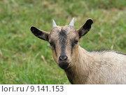 Купить «portrait nature green grass meadow», фото № 9141153, снято 25 марта 2019 г. (c) PantherMedia / Фотобанк Лори