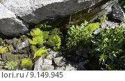 Купить «Вода течет по скале в горах Северного Кавказа», эксклюзивный видеоролик № 9149945, снято 11 августа 2015 г. (c) Алексей Бок / Фотобанк Лори