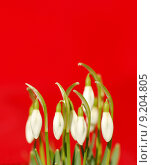Купить «background green red plant flower», фото № 9204805, снято 25 июня 2019 г. (c) PantherMedia / Фотобанк Лори