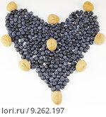 Купить «Blueberry Design», фото № 9262197, снято 25 марта 2019 г. (c) PantherMedia / Фотобанк Лори