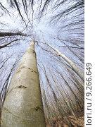 Купить «sky tree forest firmament curvature», фото № 9266649, снято 25 мая 2019 г. (c) PantherMedia / Фотобанк Лори