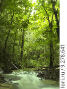 Купить «green forest », фото № 9278641, снято 15 ноября 2018 г. (c) PantherMedia / Фотобанк Лори