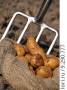 Купить «fork potato potatoes reap potatoe», фото № 9290777, снято 16 июня 2019 г. (c) PantherMedia / Фотобанк Лори