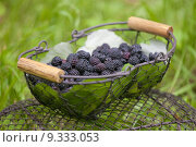 Купить «blackberries in basket», фото № 9333053, снято 19 июня 2019 г. (c) PantherMedia / Фотобанк Лори