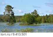 Купить «Национальный парк Оуланка, Финляндия. Пейзаж с затопленными островами», фото № 9413501, снято 10 июля 2015 г. (c) Валерия Попова / Фотобанк Лори