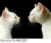Купить «cat brothers», фото № 9446397, снято 22 февраля 2019 г. (c) PantherMedia / Фотобанк Лори