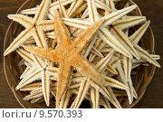 Купить «starfish», фото № 9570393, снято 16 октября 2018 г. (c) PantherMedia / Фотобанк Лори