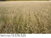 Купить «Wheat field», фото № 9576525, снято 22 августа 2018 г. (c) PantherMedia / Фотобанк Лори