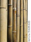 Купить «Bamboo stalks (Phyllostachys vivas », фото № 9639633, снято 22 марта 2019 г. (c) PantherMedia / Фотобанк Лори