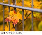 Купить «nature tree leaf autumn gorgeous», фото № 9642809, снято 20 сентября 2018 г. (c) PantherMedia / Фотобанк Лори