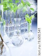 Купить «Ecology laboratory experiment in plants», фото № 9650541, снято 18 февраля 2019 г. (c) PantherMedia / Фотобанк Лори