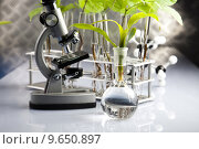 Купить «Floral science in  laboratory », фото № 9650897, снято 25 мая 2018 г. (c) PantherMedia / Фотобанк Лори