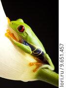 Купить «Frog - small animal with smooth skin and long legs that are used for jumping. », фото № 9651457, снято 19 февраля 2019 г. (c) PantherMedia / Фотобанк Лори