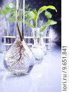 Купить «Plant laboratory», фото № 9651841, снято 18 февраля 2019 г. (c) PantherMedia / Фотобанк Лори