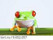 Купить «Frog - small animal with smooth skin and long legs that are used for jumping. », фото № 9652057, снято 19 февраля 2019 г. (c) PantherMedia / Фотобанк Лори