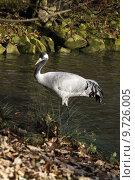 Купить «bird birds crane grayer gro», фото № 9726005, снято 25 марта 2019 г. (c) PantherMedia / Фотобанк Лори