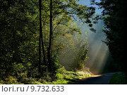 Купить «light tree bright road street», фото № 9732633, снято 22 марта 2019 г. (c) PantherMedia / Фотобанк Лори