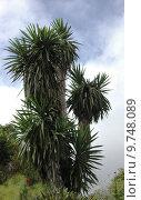 Купить «la microclimate palm tree national», фото № 9748089, снято 17 августа 2018 г. (c) PantherMedia / Фотобанк Лори