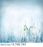Купить «Snowdrop Galanthus flowers on winter bokeh background», фото № 9749741, снято 15 ноября 2018 г. (c) PantherMedia / Фотобанк Лори