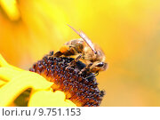 Купить «yellow blossom bloom insect pollen», фото № 9751153, снято 6 июля 2020 г. (c) PantherMedia / Фотобанк Лори