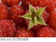 Купить «A raspberry fruit background close up shoot», фото № 9793609, снято 23 июля 2019 г. (c) PantherMedia / Фотобанк Лори
